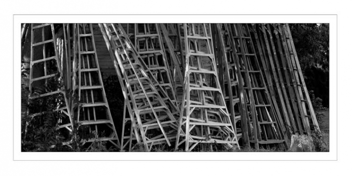 A picture of apple orchard ladders leaning against a barn.